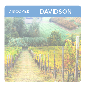 small thumbnail image for Davidson county