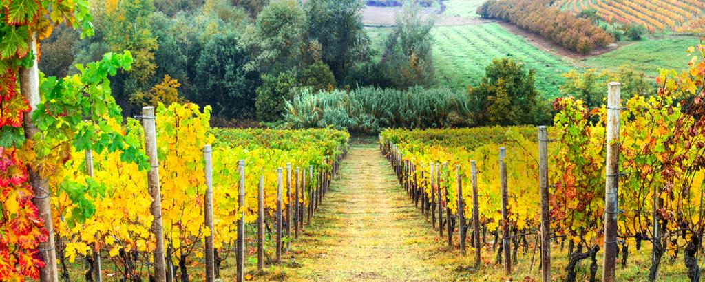 view of winery vineyard